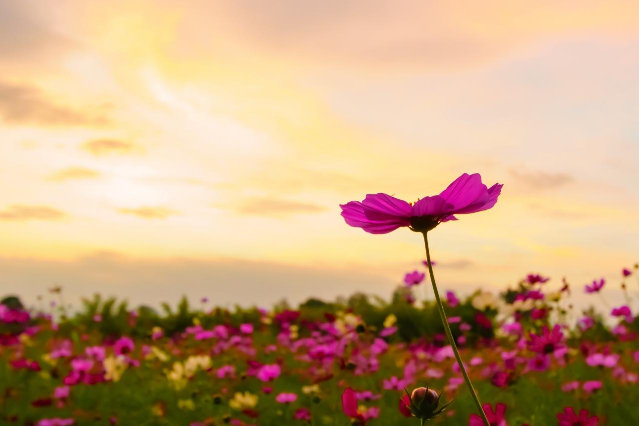 「不倫が終わる=解決。そして幸せになる」は大間違い